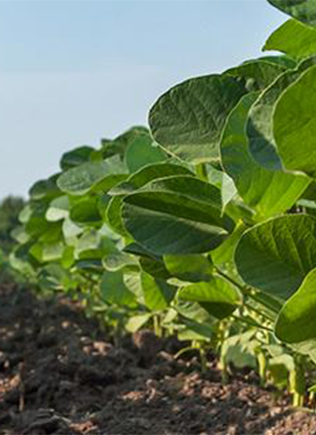 FMC Herbicides help you control the toughest, most resistant weeds.