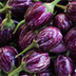 Brinjal is one of the most common tropical vegetables grown in India.