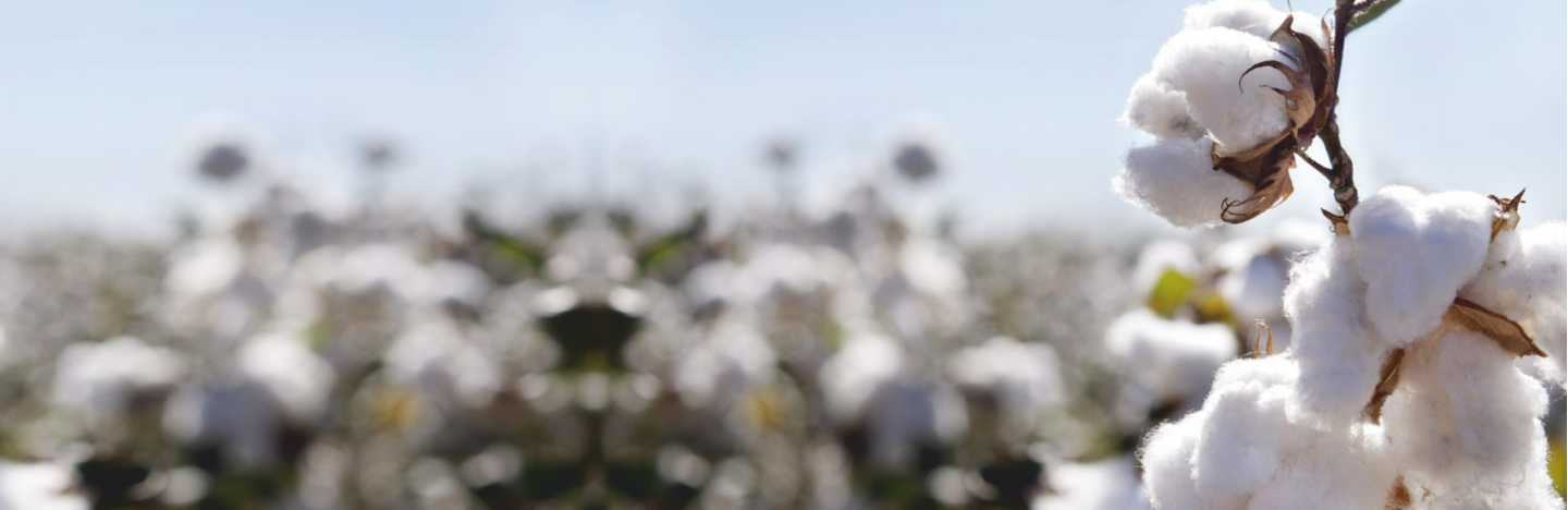 FMC offers a robust portfolio of Crop Protection & Nutrition solutions for Cotton.