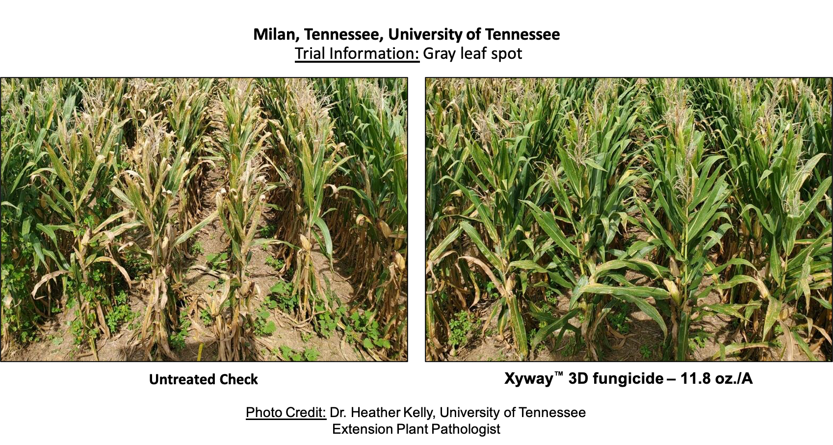 Xyway 3D Trial Foliar side by side comparison