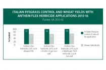 Italian Ryegrass Control and Wheat Yields with Anthem Flex Herbicide