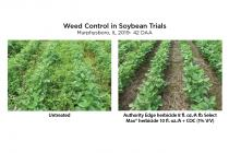 Weed Control in Soybean Trials